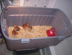 Chick Brooder Ideas