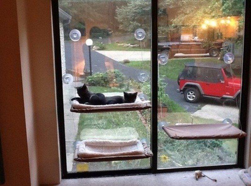 Window-Mounted Cat Bed  7f9b154497