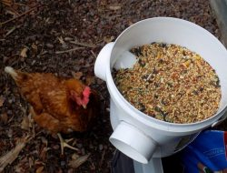 Clever Solutions Reduce Chicken Feed Waste