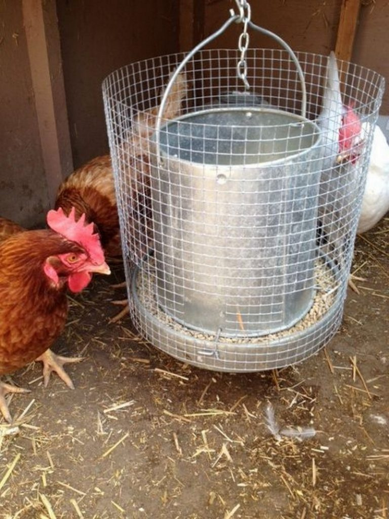The Best Chicken Feeder In The World The Art Of Doing