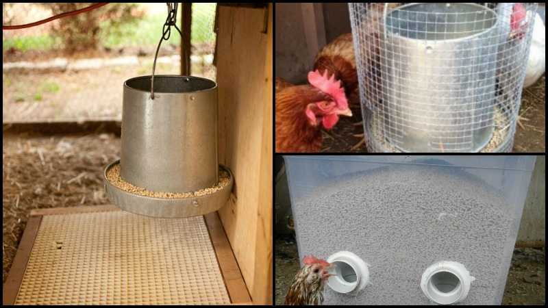 Clever Solutions to Reduce Chicken Feed Waste