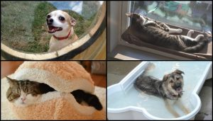 10 Awesome Gift Ideas Your Pets Will Love