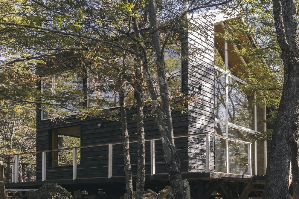 ED Cabin blends well with its surrounding vegetation.