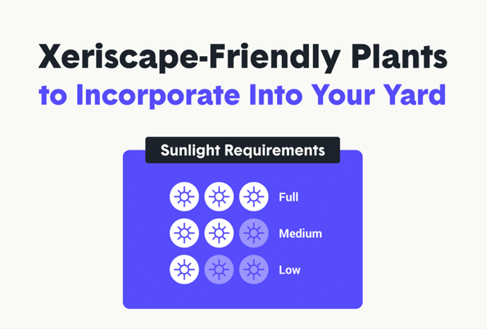 Depending on the planting zone in which you live, you may find many drought-tolerant plants can thrive in your region.
