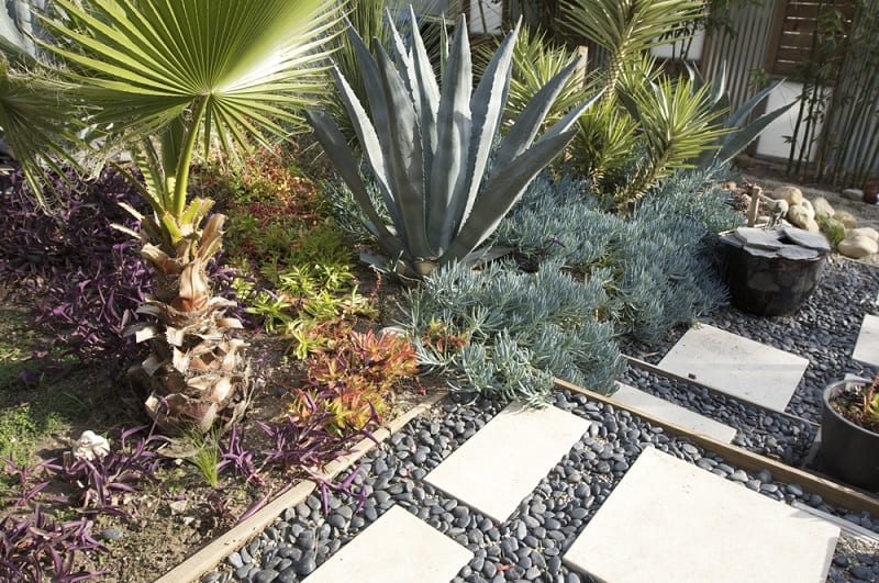 The plants in a xeriscape garden reduce the need for water for outdoor use and lawn maintenance.