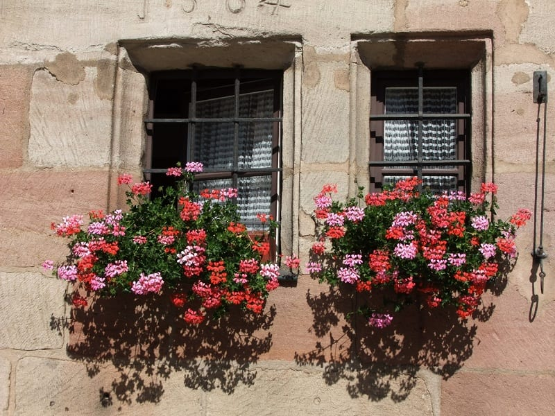 You'll find many window boxes and troughs sold in garden centers.