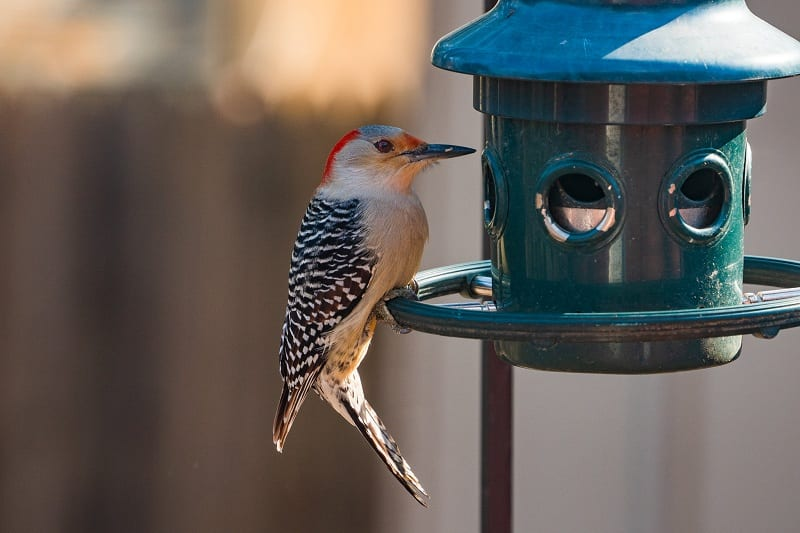 Birdfeeders and birdhouses quickly and easily attract pleasant garden visitors.