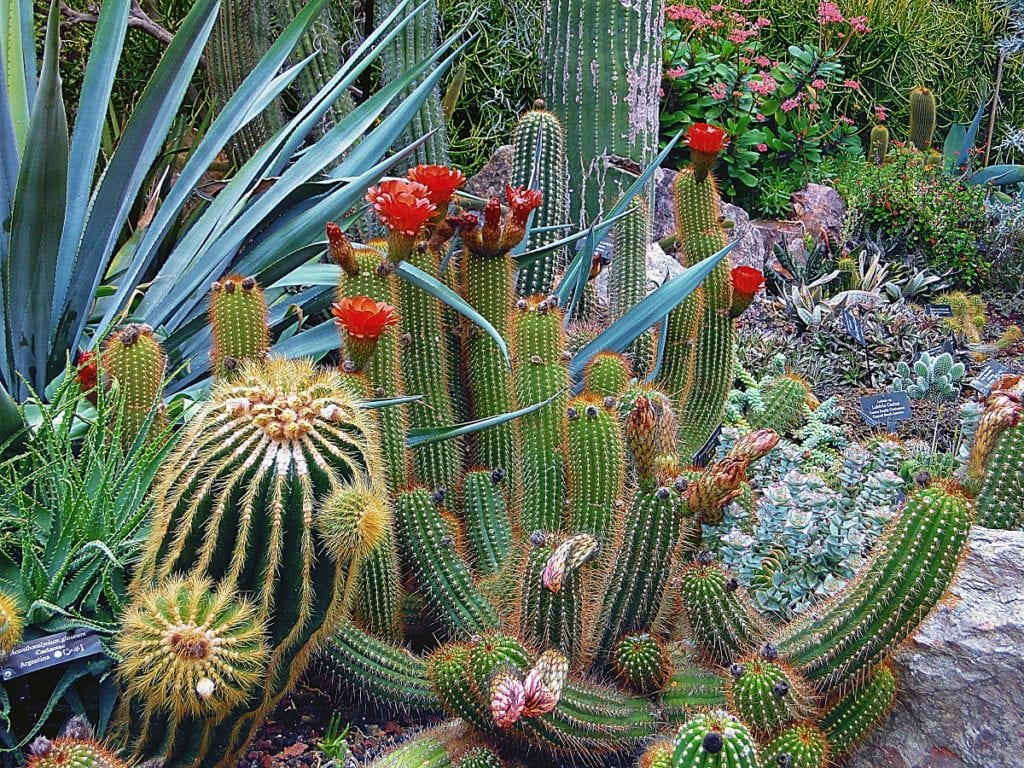You can do your part to save water while still achieving a beautiful yard with xeriscaping.