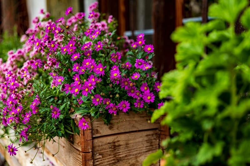 For a house, we recommend a wood window box.