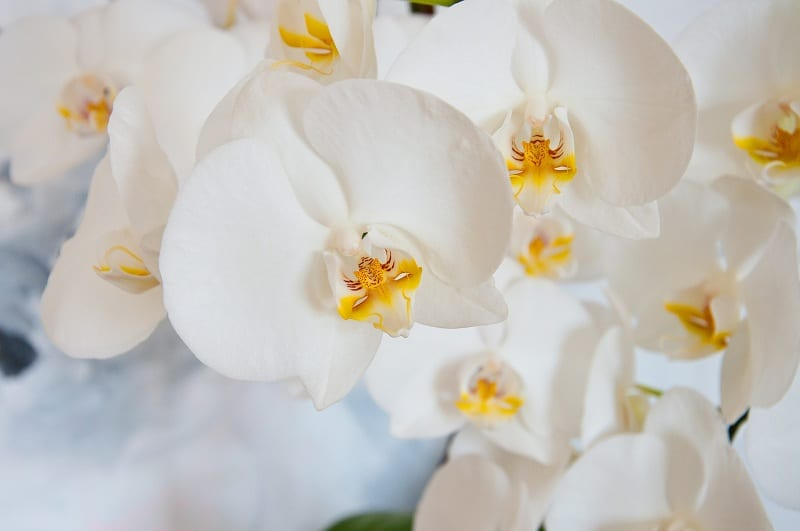 Orchids need moist soil and indirect light to thrive.