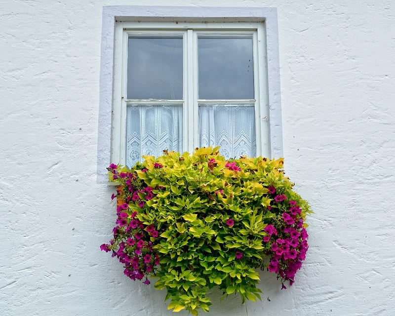 Overflowing with color and sweet scent, window boxes are legacy from a time when people built their homes on the edge of the street.