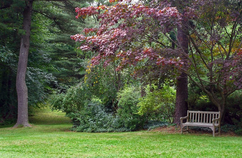 Establish a place to sit and observe the beauty of nature in your garden or build a path for walking.