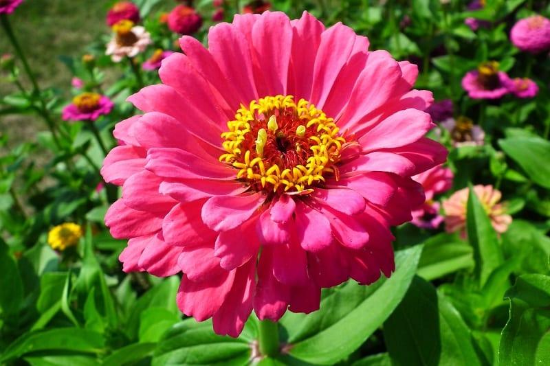 Do you find bright colors invigorating?
