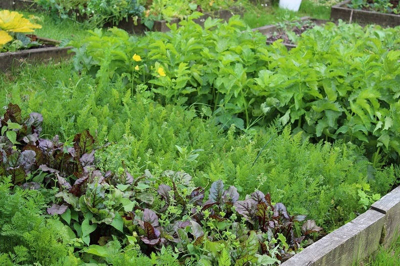Grouping your plants reduces water waste and the need for weeding.