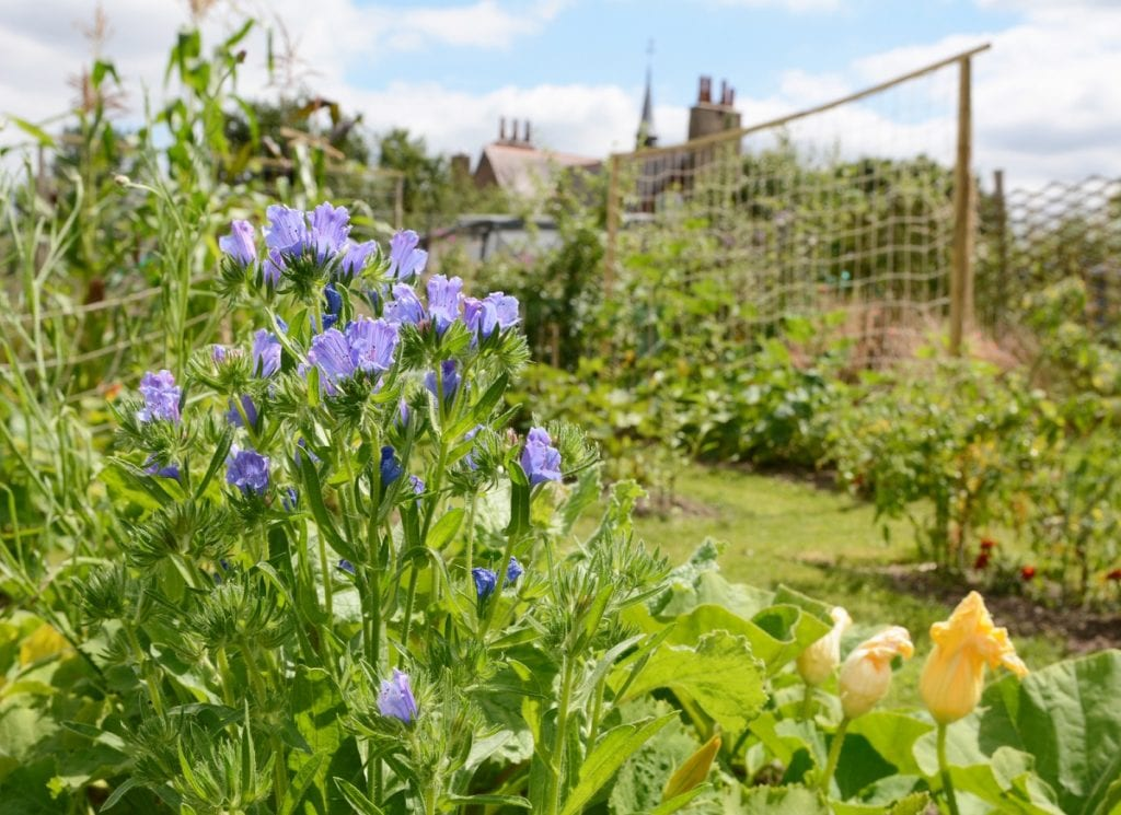 Potager gardens combine the practical nature of the English kitchen garden with the stylishness  of French fashion.