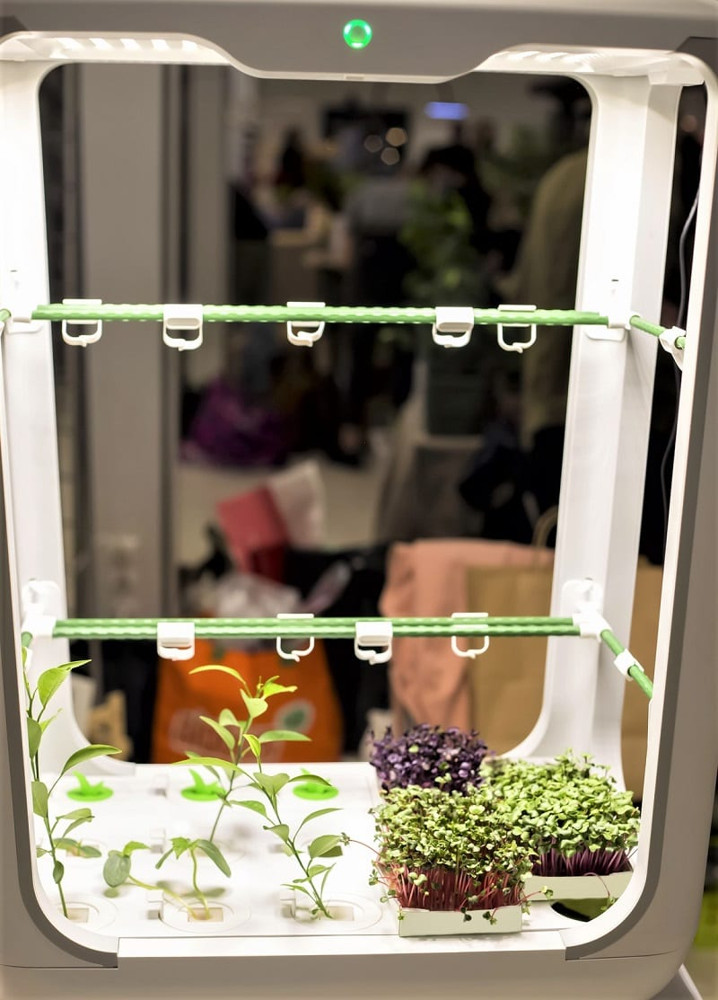 Many gardeners use hydroponic systems to supplement their outdoor harvests.