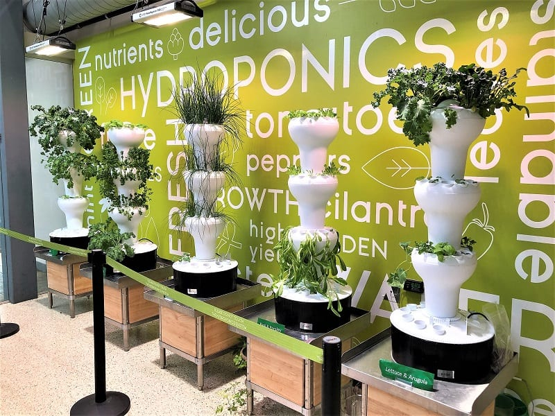 Many of the hydroponic systems on the market are aesthetically pleasing.