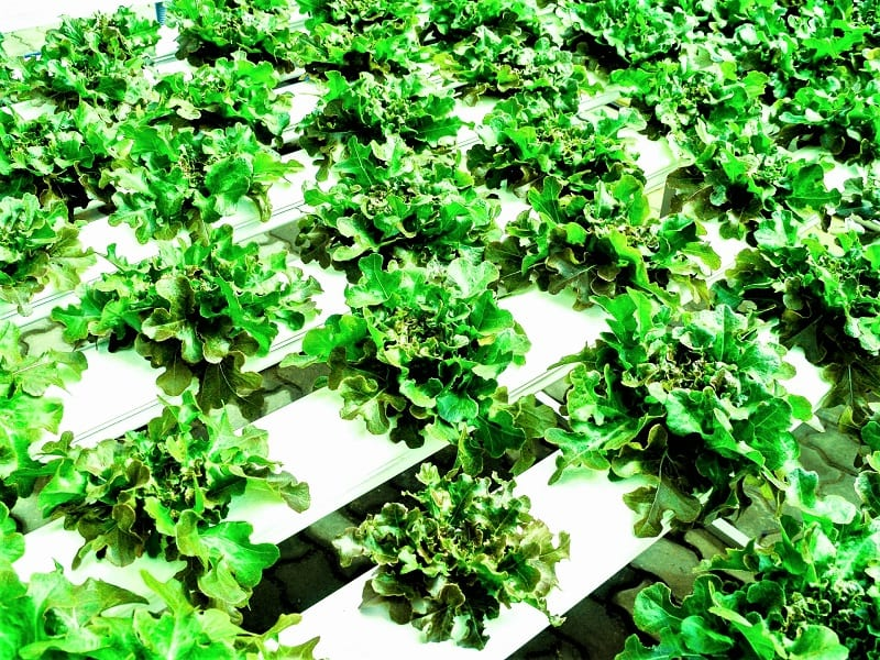 """Hydroponic plant owners are """"plant parents,"""" too."""
