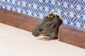 Structural Pest Control: 6 Useful Tips For Homeowners